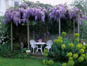 Garden lilac (photo) flowers and other plants for him