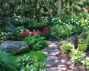 Flowers and plants for the garden in the shade