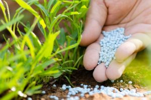How and what mineral fertilizers to use on the site for growing vegetables