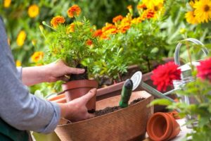 My feedback on growing flowers in the garden - planting and care, mistakes and disappointments