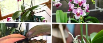 Growing Orchids at Home - PROFESSIONAL Tips